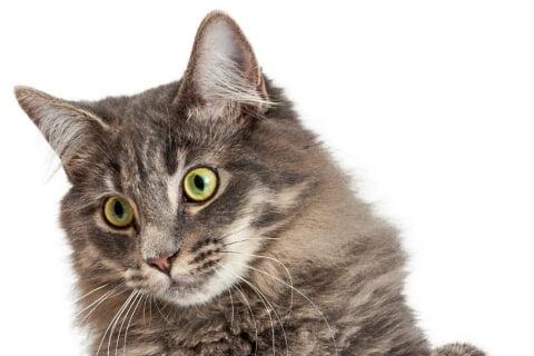 Pet-Friendly-Burglar-alarms